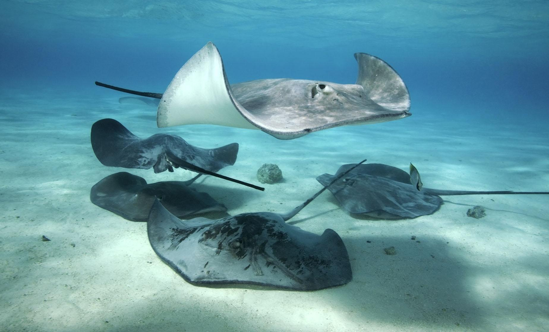 Stingray City by Jetski and Starfish Beach