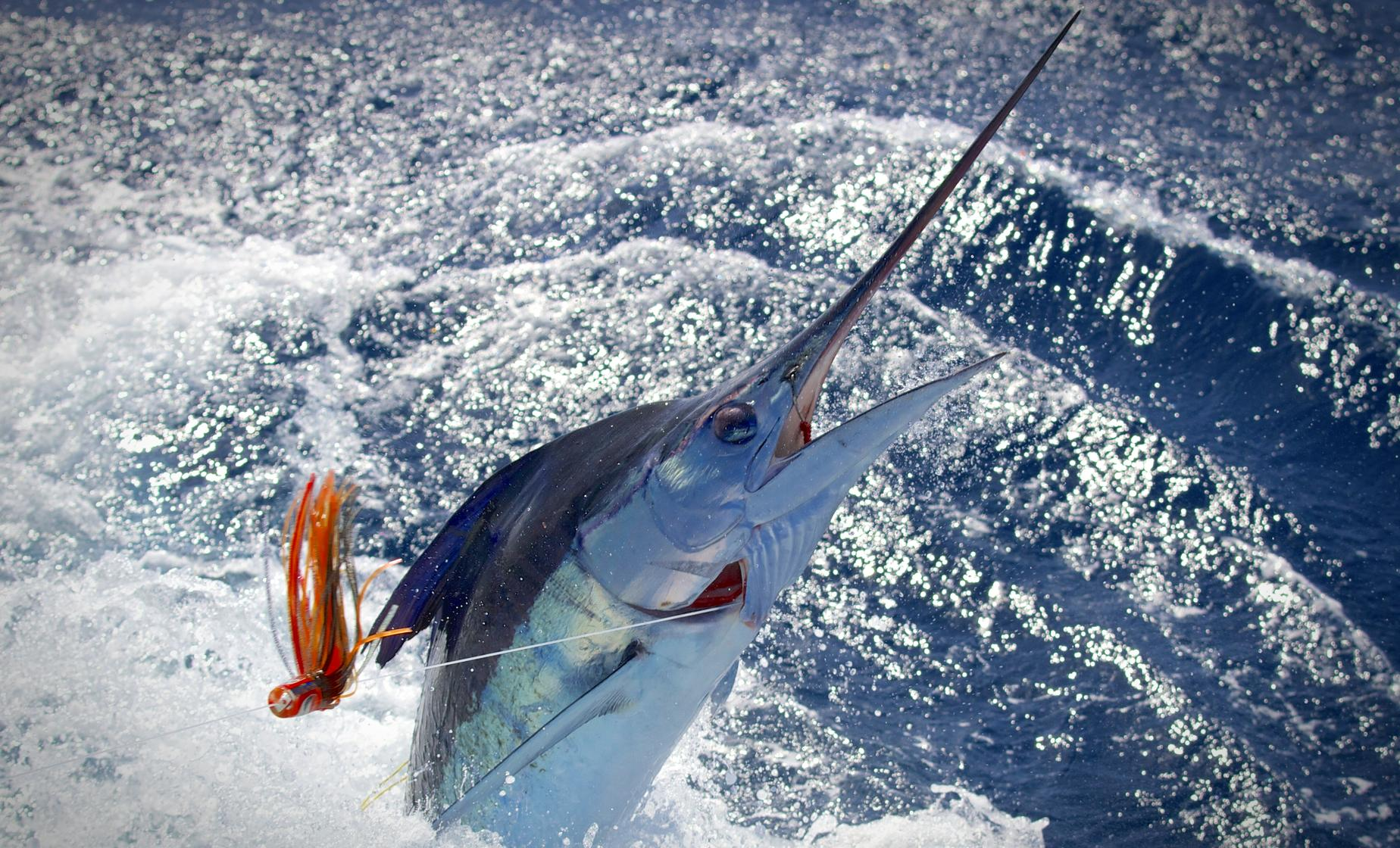 grand cayman deep sea fishing charter excursion