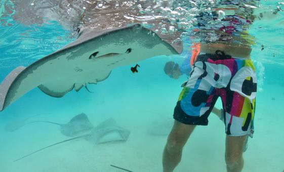Snorkeling Day Trip in the Bahamas at Stingray City & Coral Gardens
