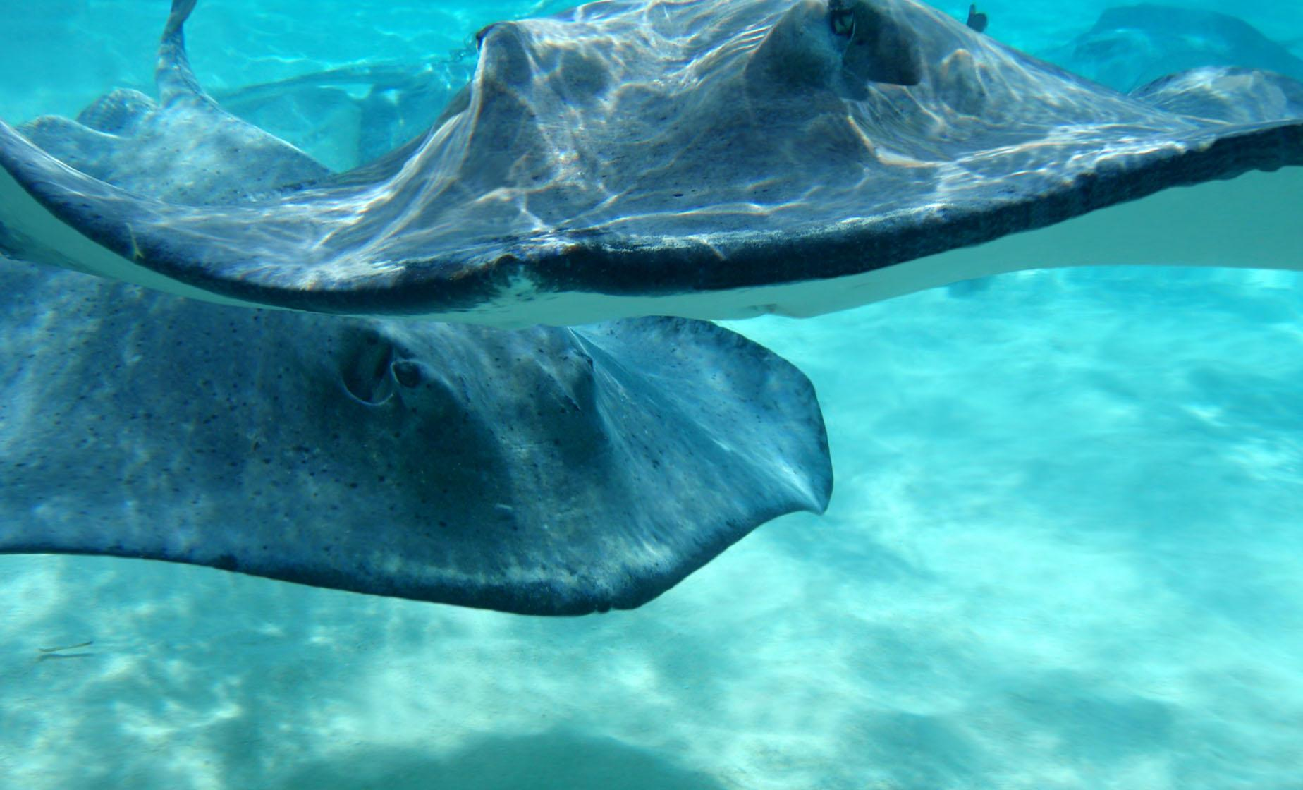 Stingray City Snorkel & Trimaran Sail Charter Shore Trip