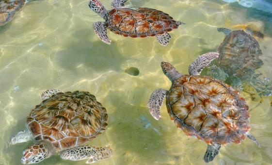 Grand Cayman Icons - Turtles, Hell & Seven Mile Beach