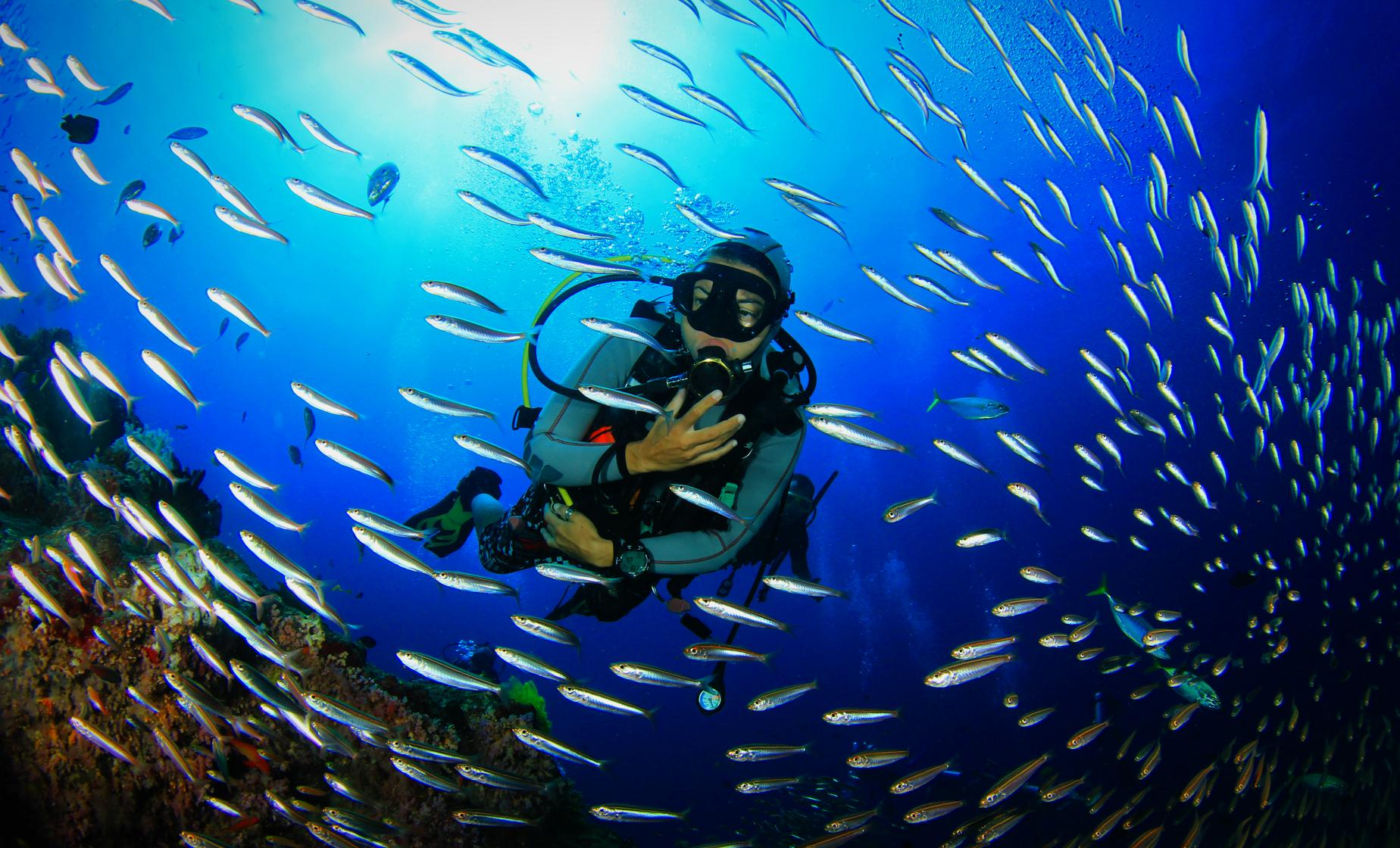 Certified Grenada One Tank Dive Tour