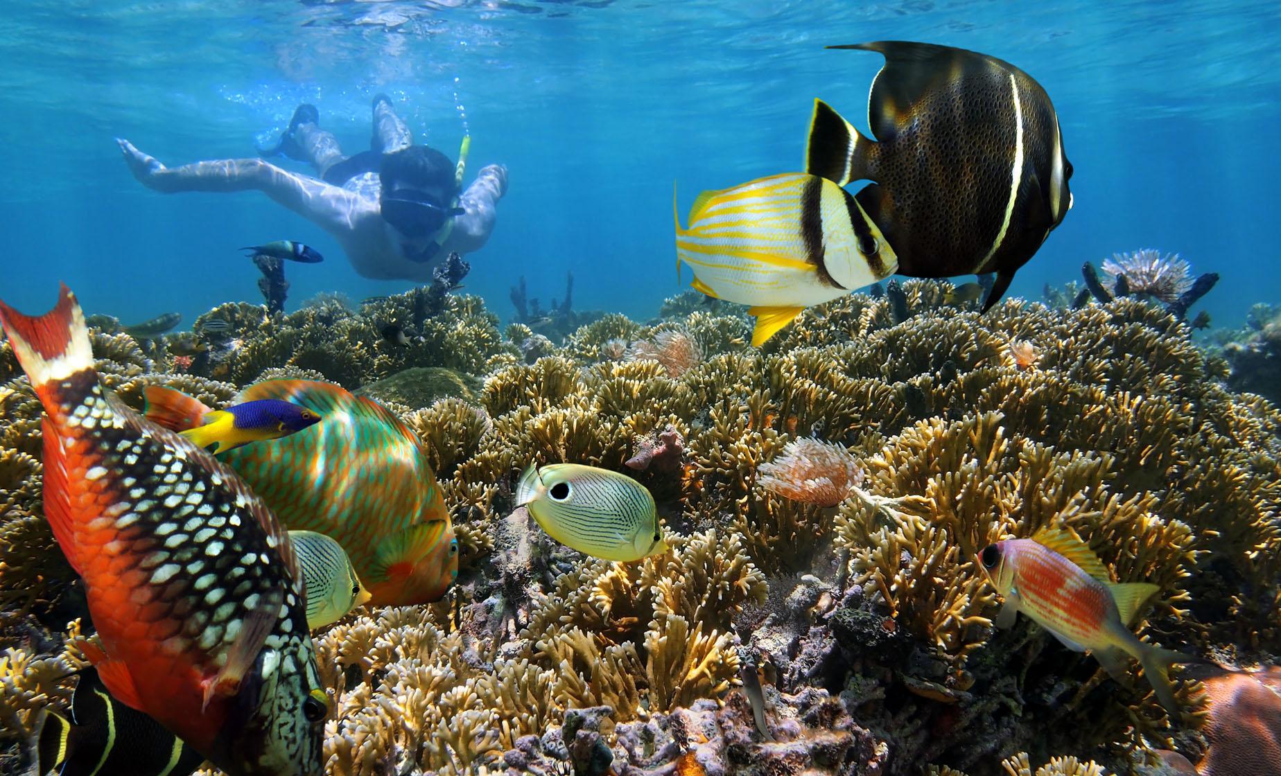 Ultimate Snorkel