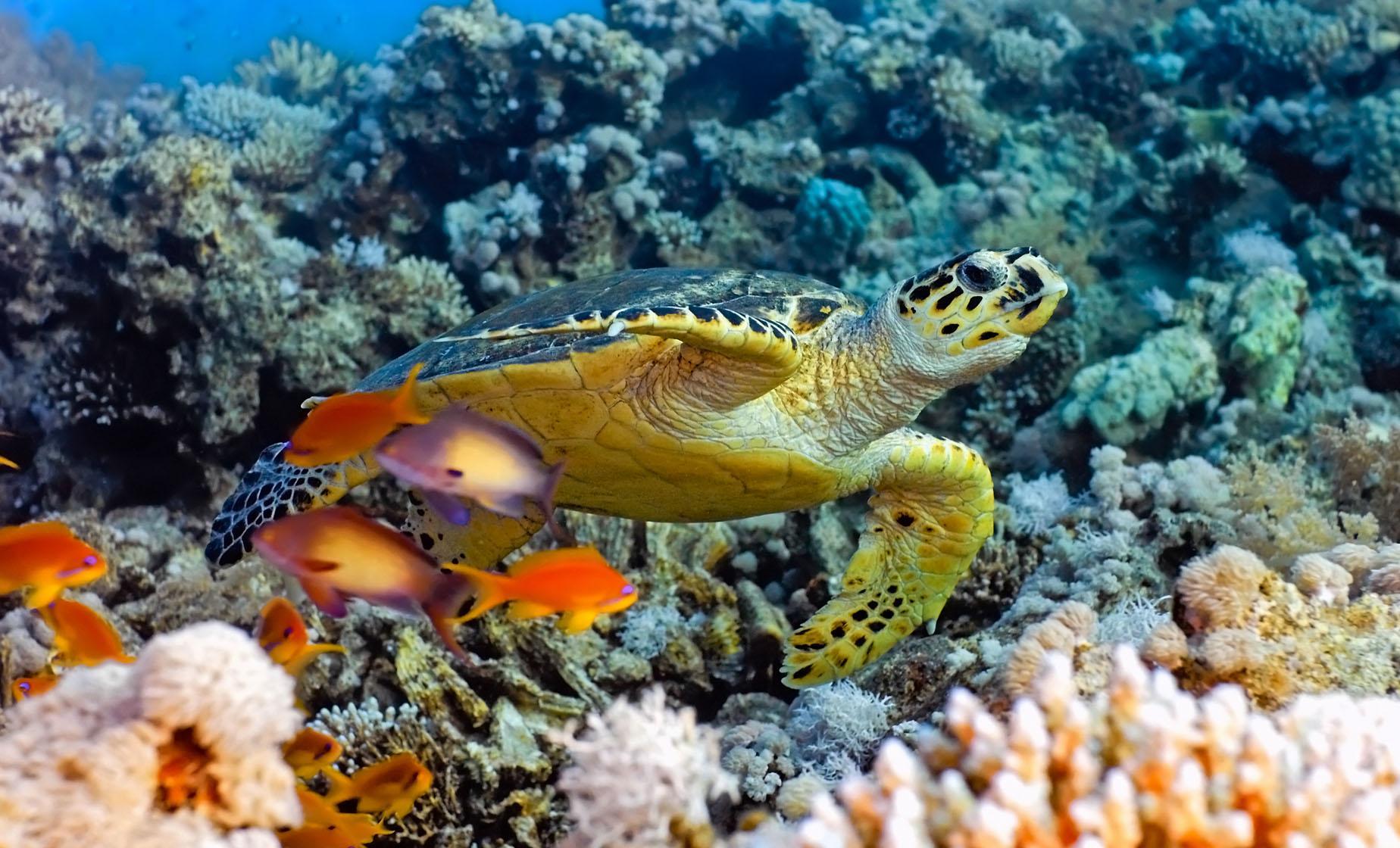 Exclusive Supreme Snorkeling