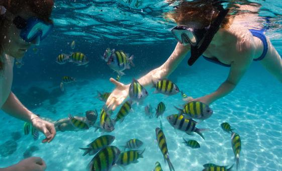 Premium Snorkel and Sail Adventure Morning in Key West (Historic Key West Seaport)