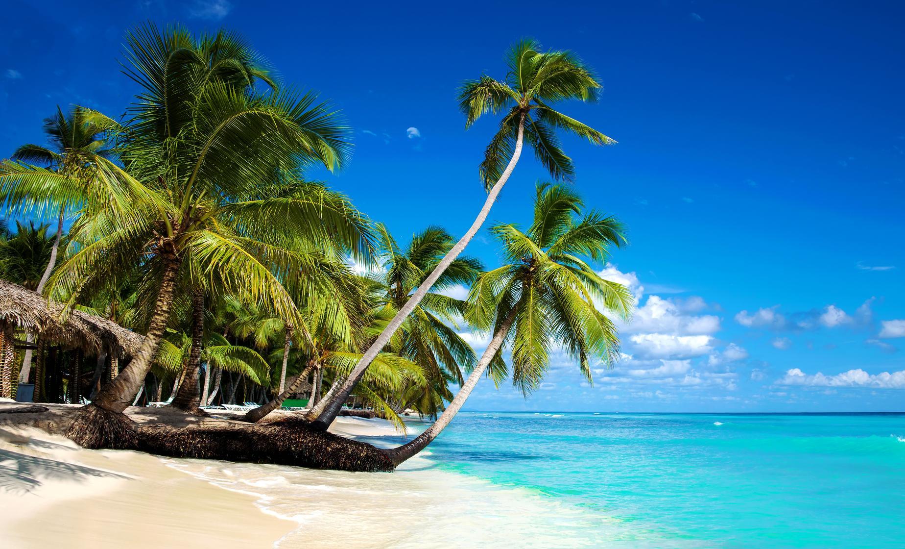 Private Saona Island Eco Adventure
