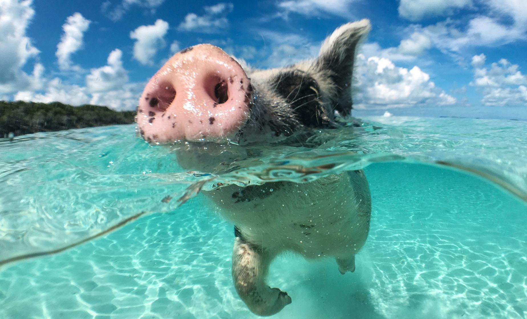 Swimming Pigs & Exclusive Island