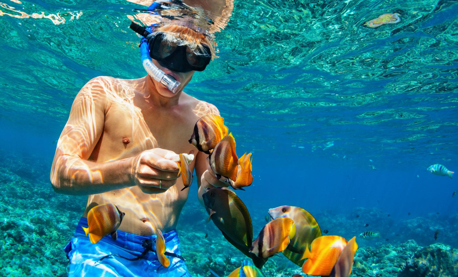 Nassau Half Day Boating & Snorkel Adventure Excursion to Famous Reefs & Shipwrecks