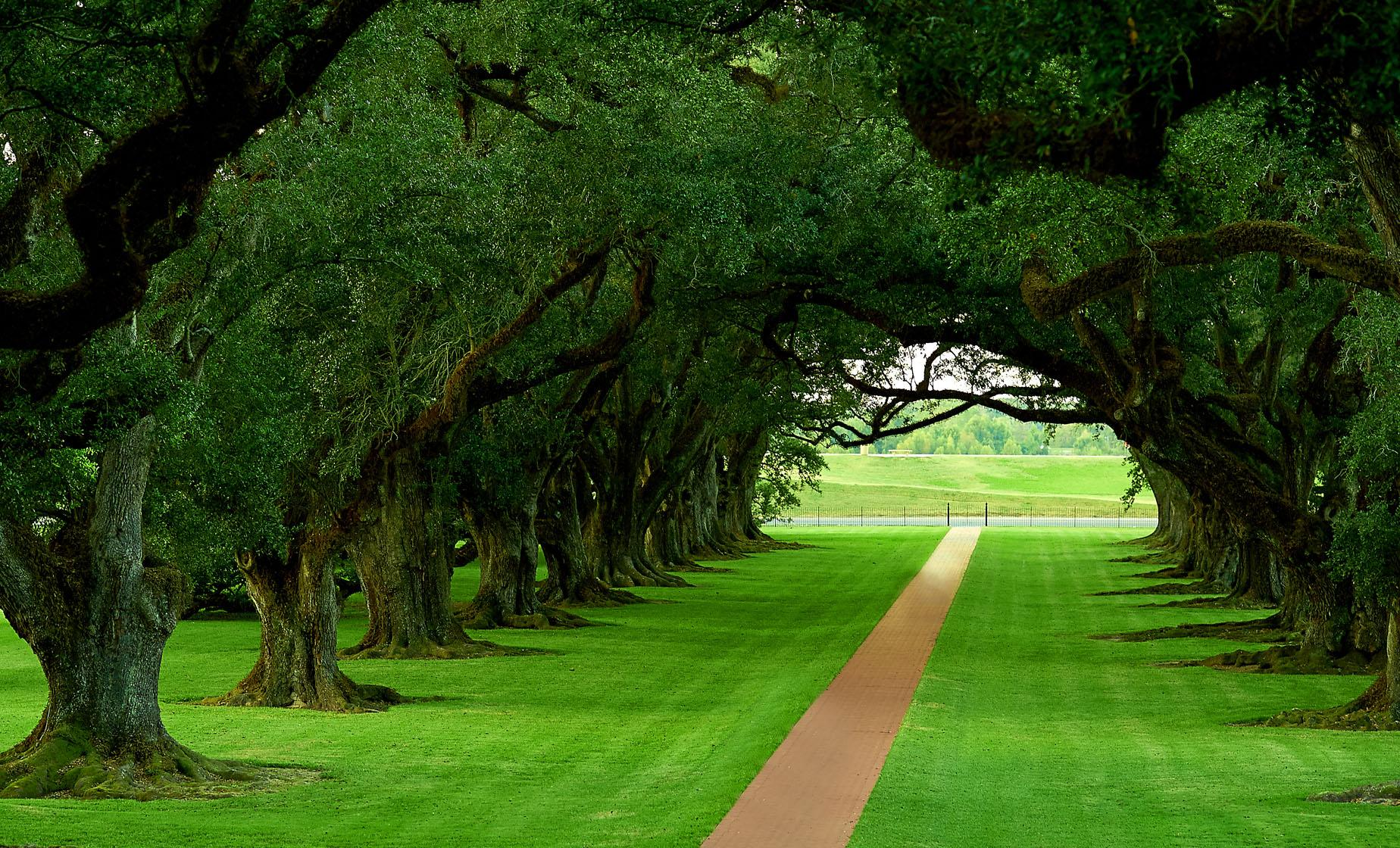 Oak Alley Plantation Tour in New Orleans (Majestic Cypress Trees)