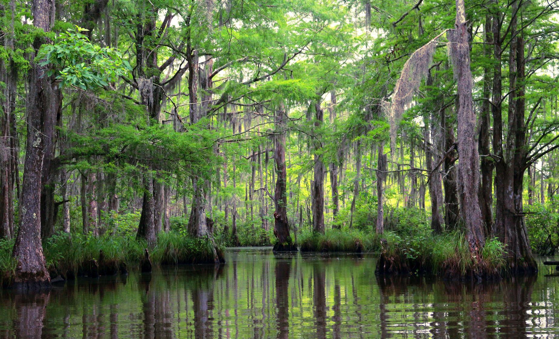 Bayou and Swamp Tour in New Orleans (Jean Lafitte Historical Park, Barataria Preserve)