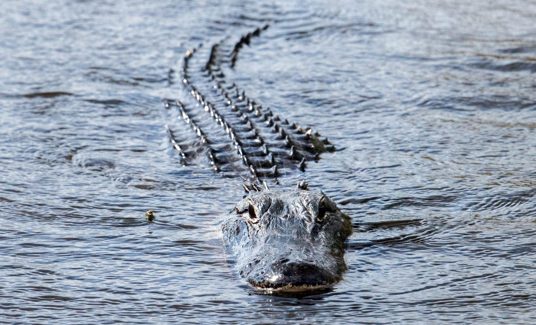 Central Florida Everglades Airboat Adventure with Transport from Orlando Florida