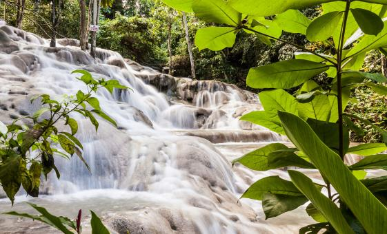 Private Ocho Rios Dunn's River Falls and Area Highlights