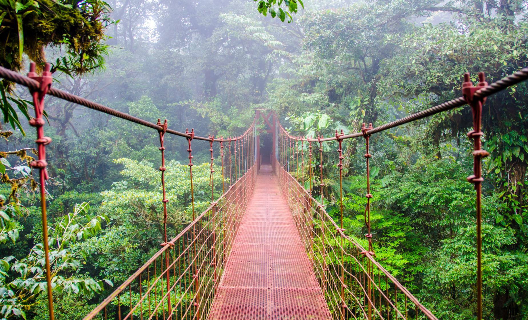 Monteverde Cloud Forest, Hanging Bridges and Coffee Tour