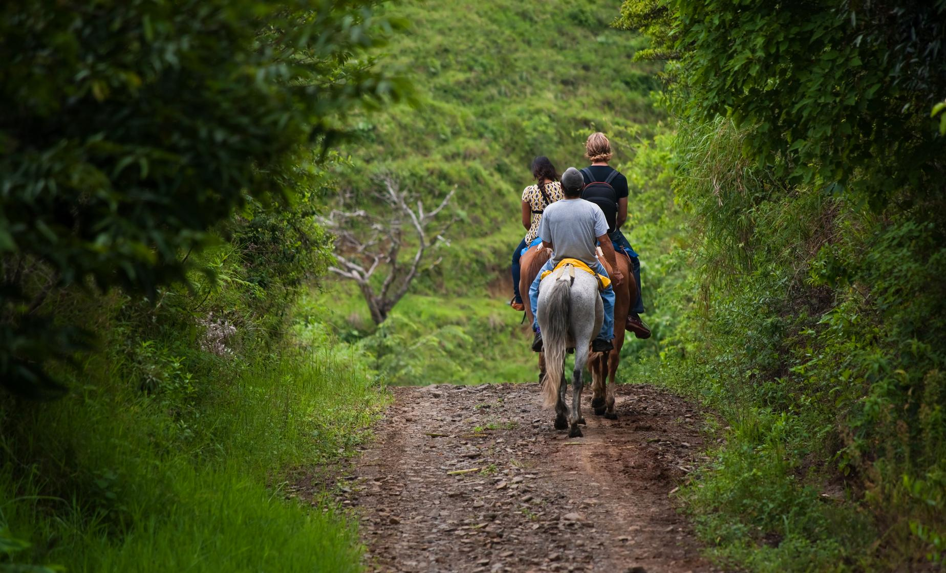 Horseback Riding with Safari Boat Combo