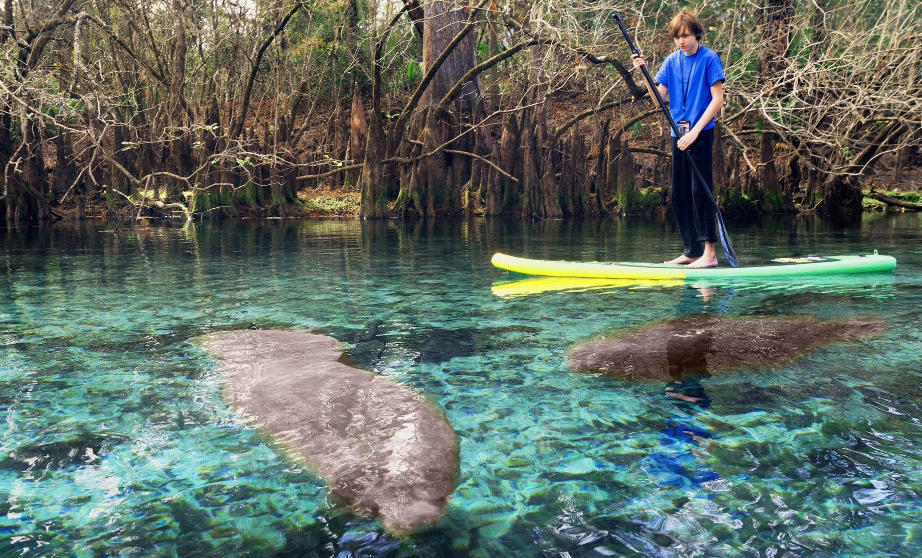 Mucho Manatee Stand-Up Paddleboard Tour