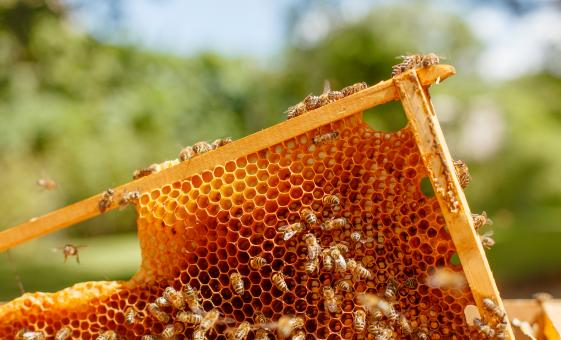 Private Yucatan's Bee Industry and Coastal Eco-system