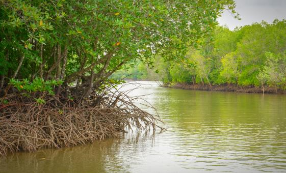 Garifuna and Mangrove Tunnel