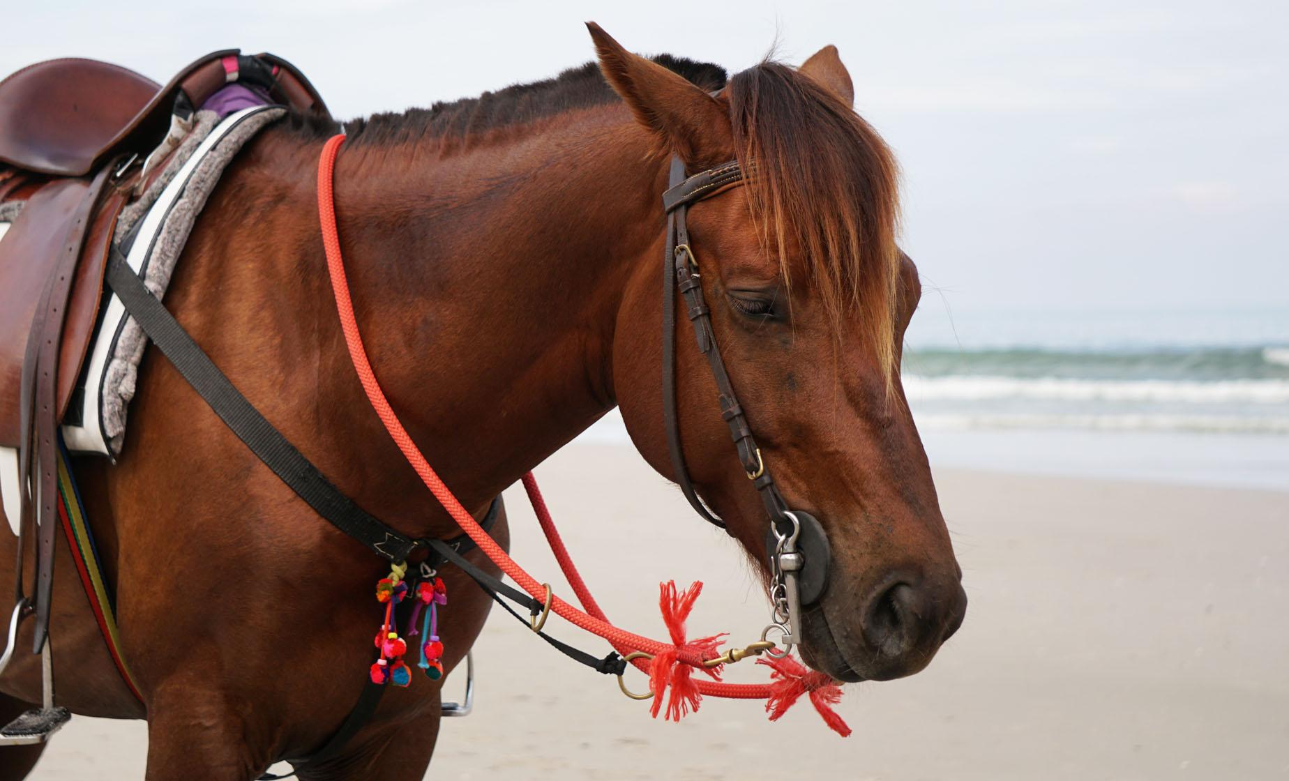 Horseback Ride & Snorkel Cruise Excursion in Roatan