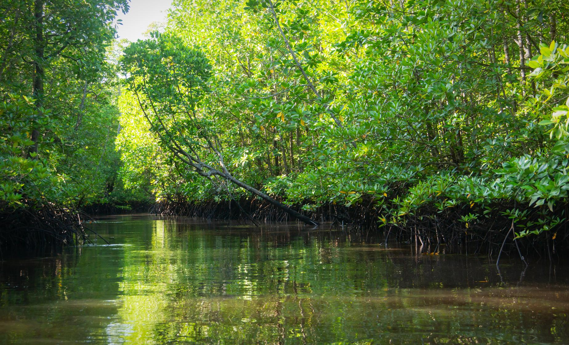 Mangrove Tunnel & Island Tour