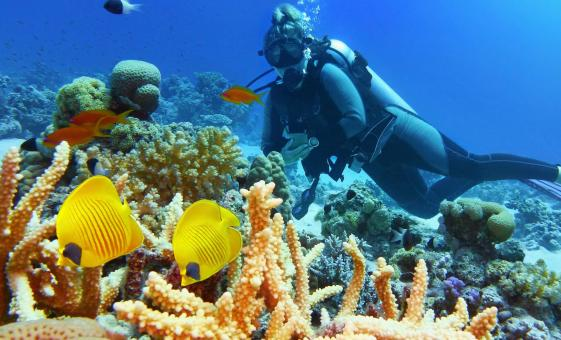 Certified Two Tank Dive Cruise Tour in Roatan (No Gear) | San Simon Beach Club