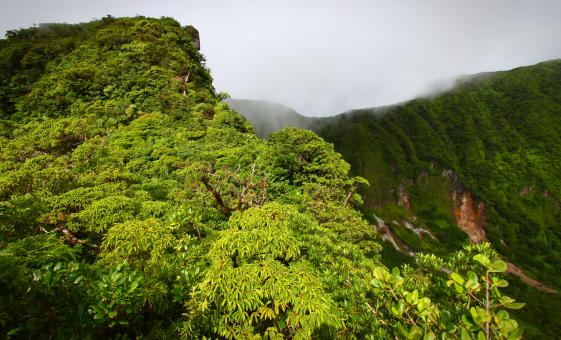 St. Kitts Rainforest Hiking Tour