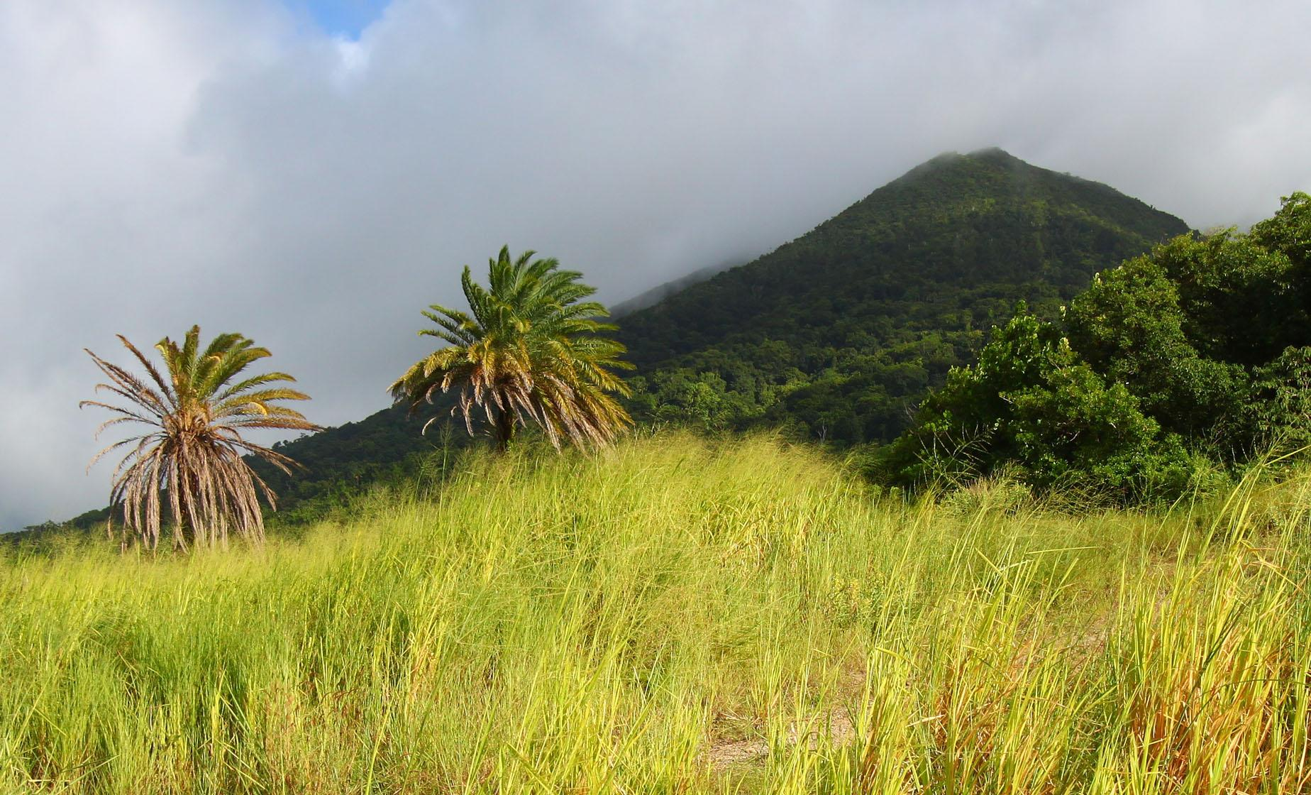 St. Kitts Volcano Hike
