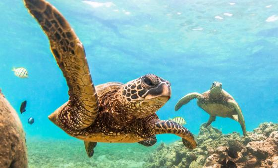 Kayak and Snorkel with Sea Turtles