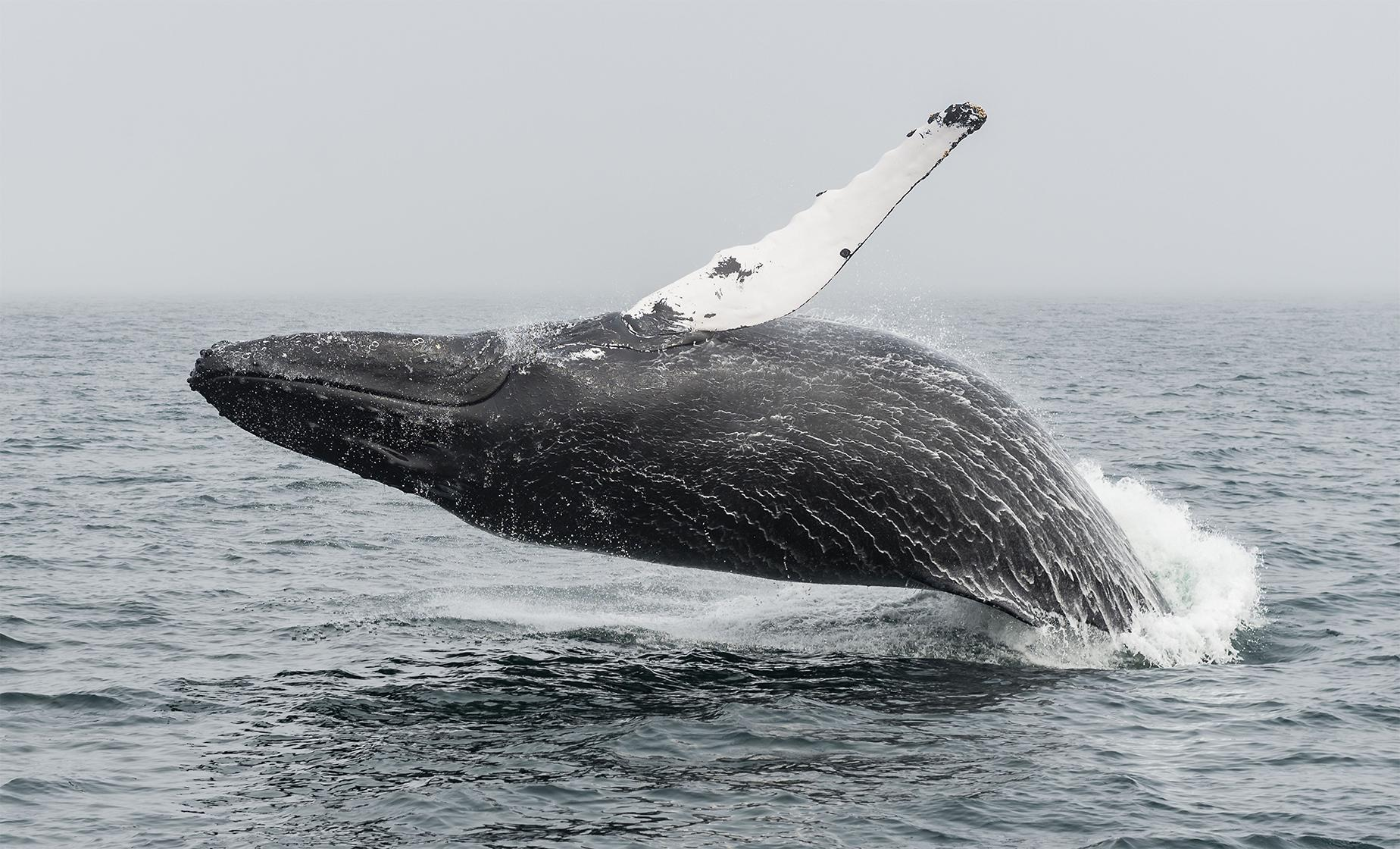 Boston Whale Watch Cruise Tour