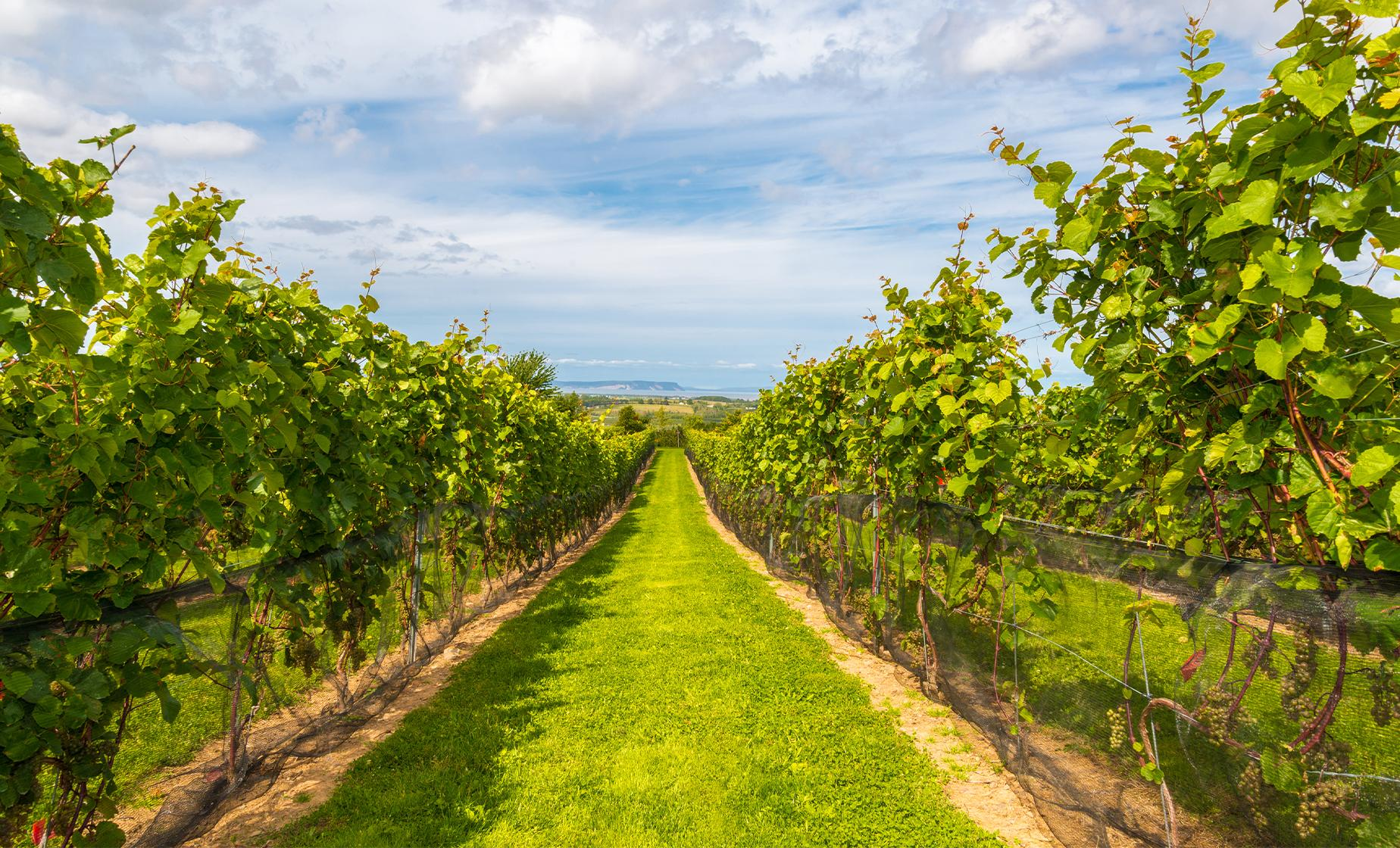 Annapolis Valley Wine Tour with Lunch