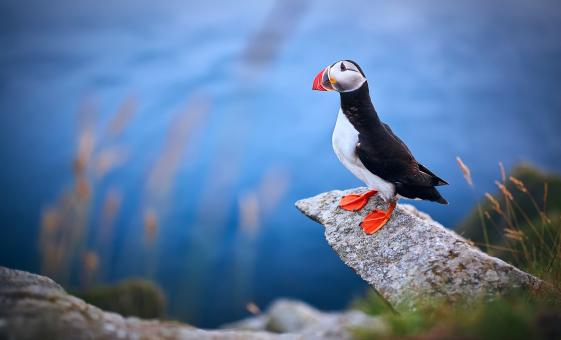 Private Full Day Alesund Runde Island with Puffin Watching