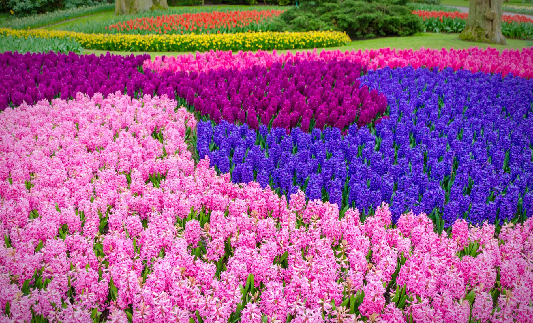 Flowerfields and Keukenhof