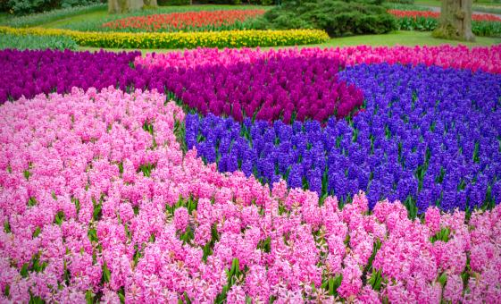 Photo of Flowerfields and Keukenhof