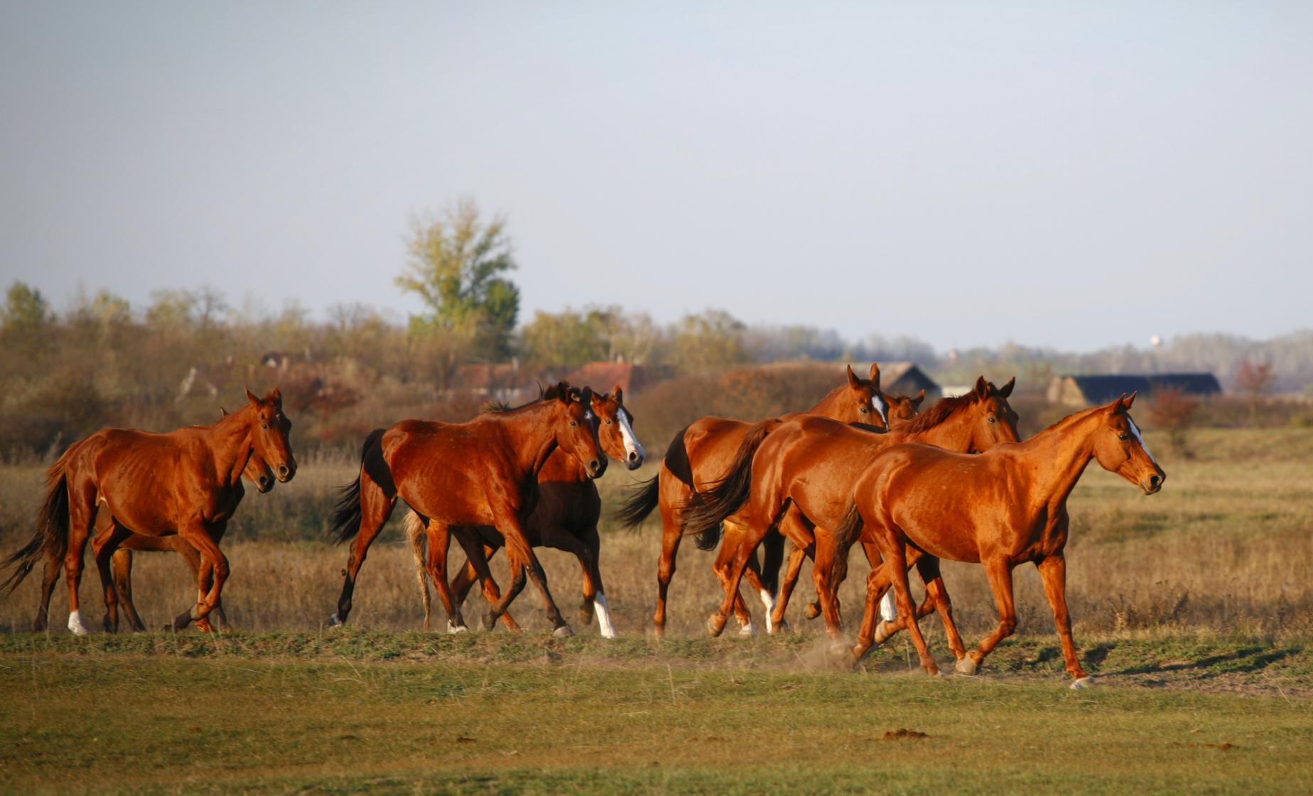 Puszta Horse Extravaganza