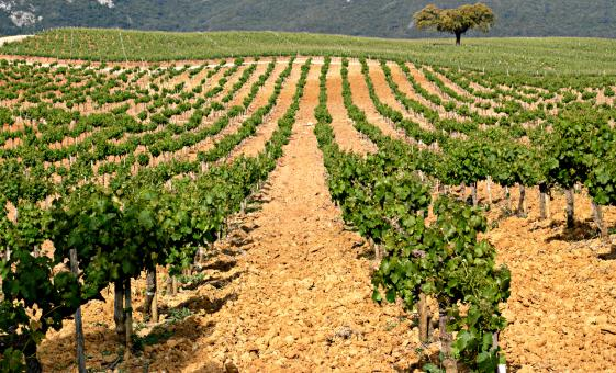 Arrabida Wine Walk