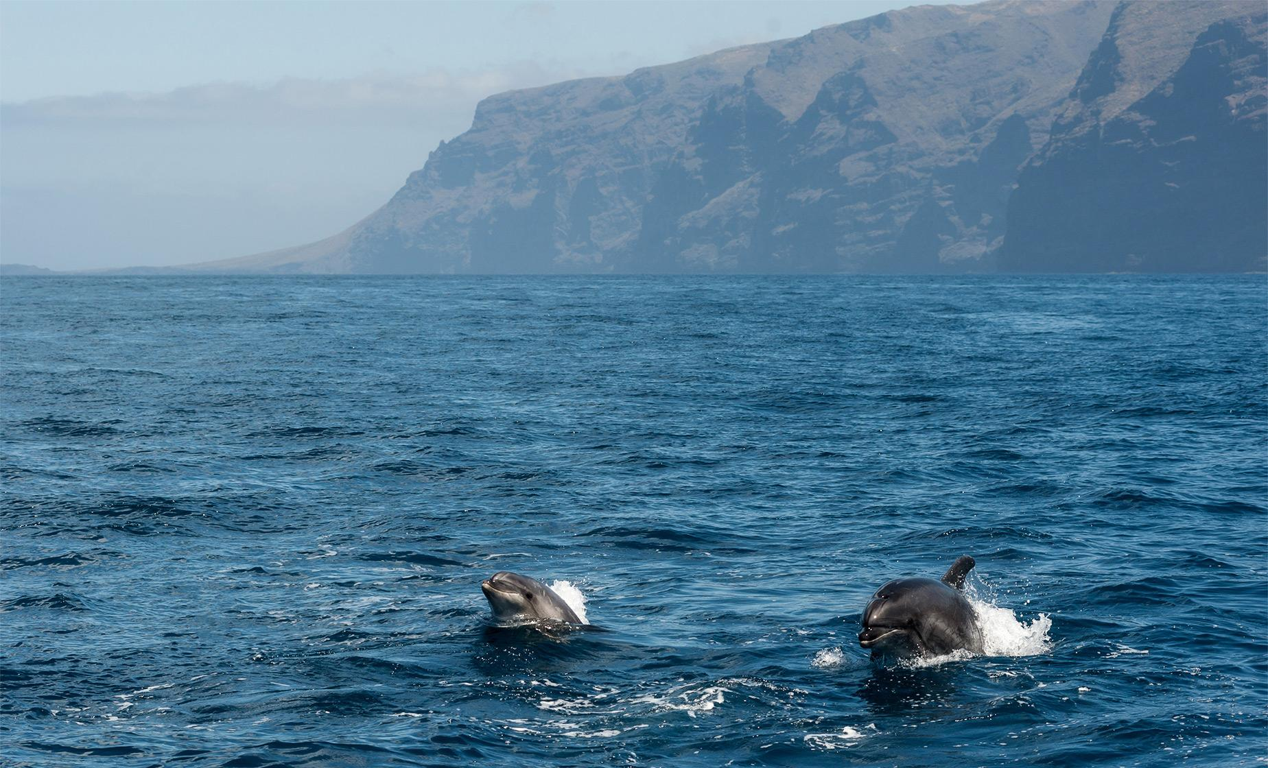 Madeira Dolphins and Whales by Catamaran