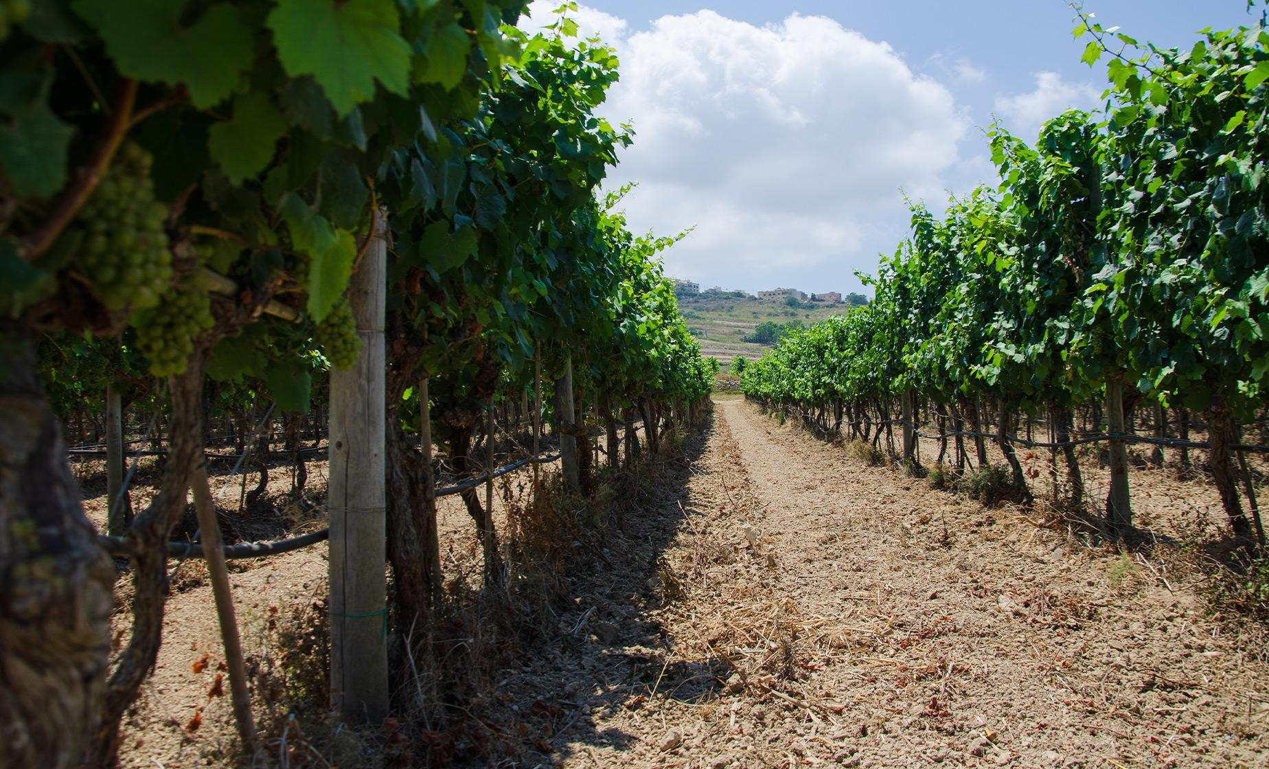 Private Wines and Villages Group Tour in Malta (Marsaxlokk, Ta'Qali Winery)