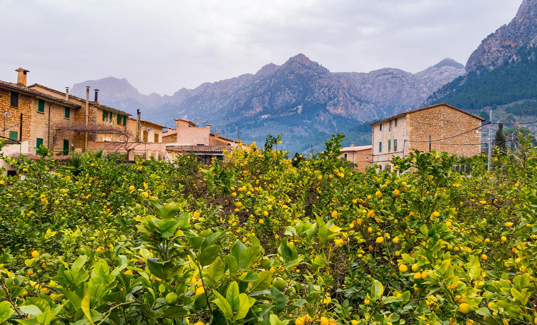 Private Valley of Soller and Palma