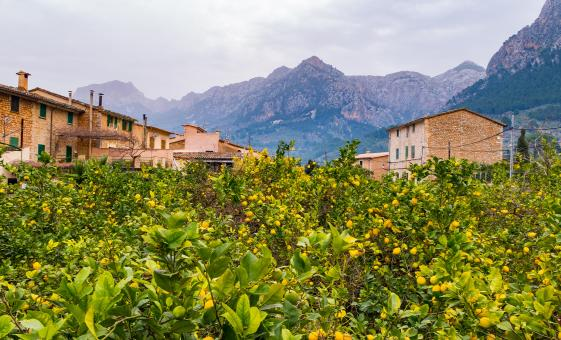 Private Valley of Soller and Palma Tour (Port of Soller)