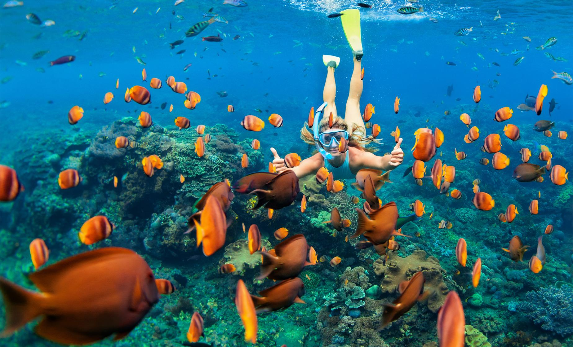 Ras Mohammed Snorkeling Tour