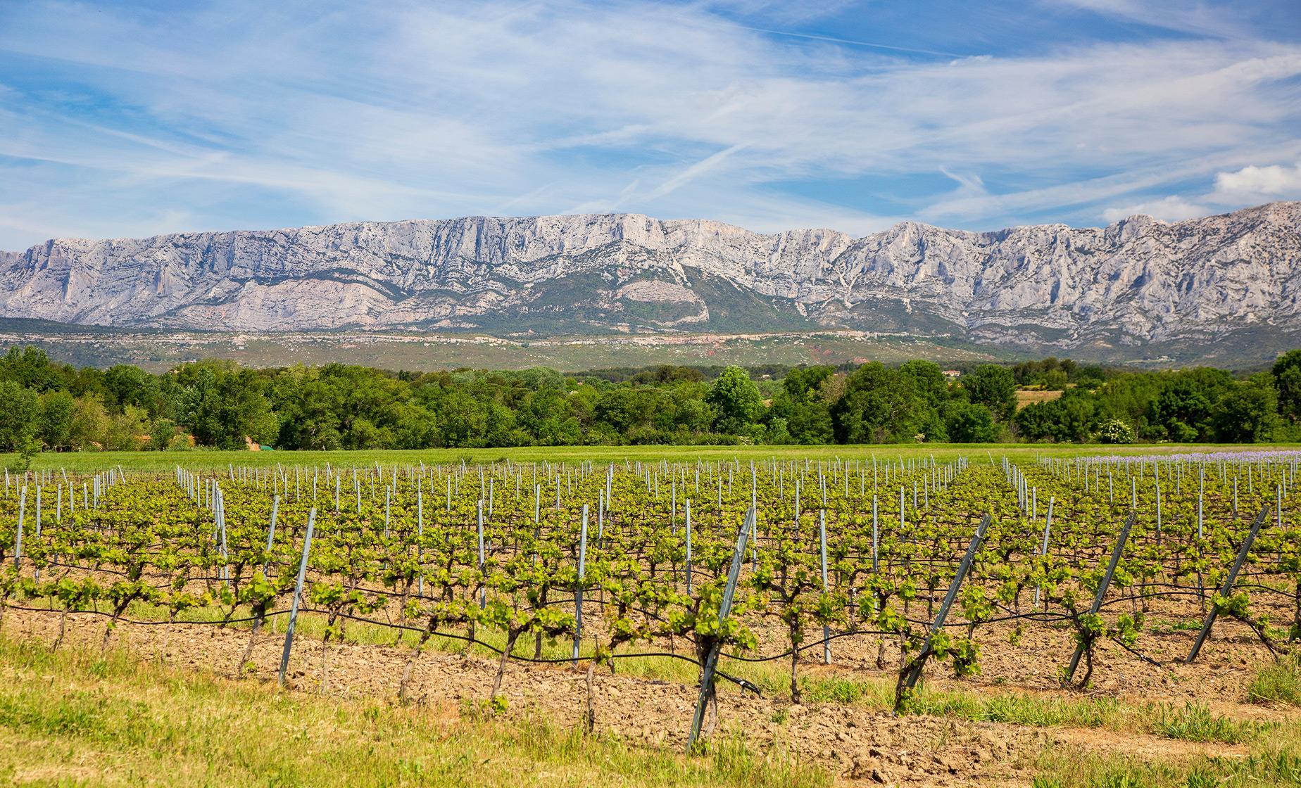 Aix-en-Provence Wine Tour