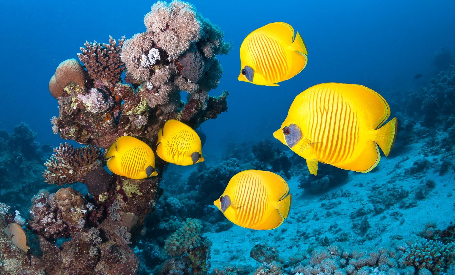 Blonde's Reef Snorkel