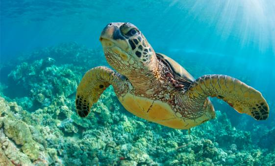 Discover Scuba by Boat at Sea Turtle Cove