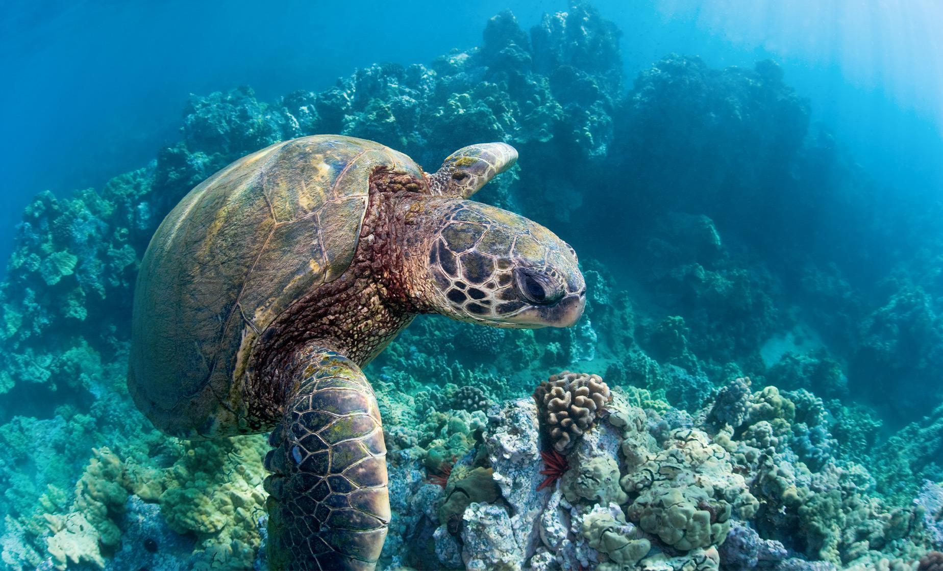 Maui Snorkel Cruise