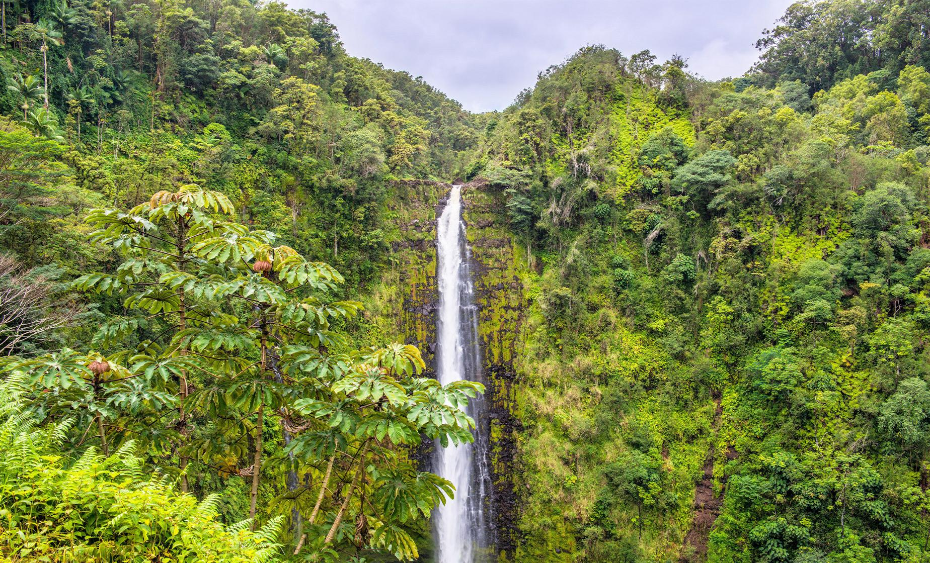 Exclusive Waterfalls and Rainforest Tour from Kona (Hamakua Coast, Parker Ranch)