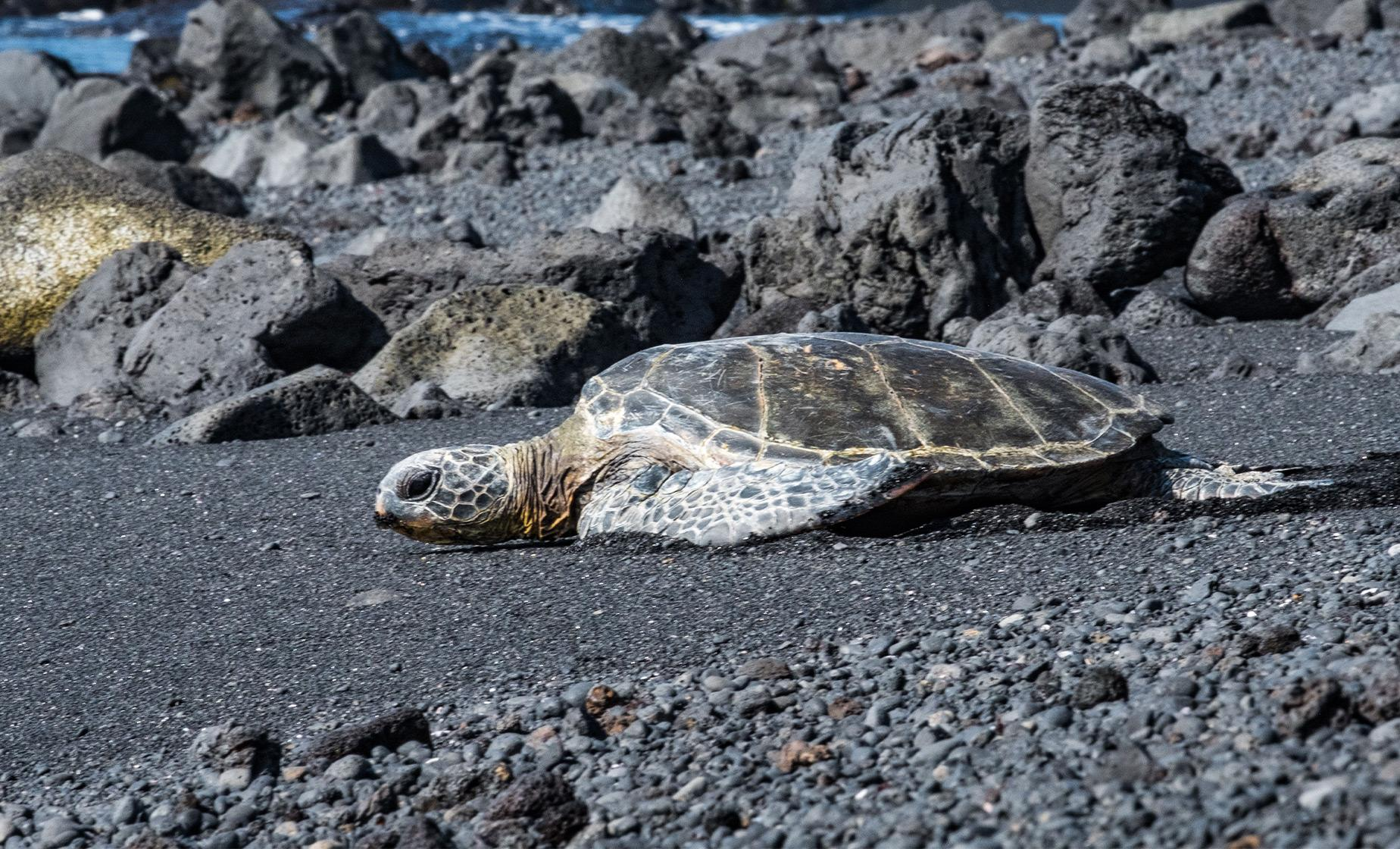 Private Kona Adventure to Black Sand Beach Plus