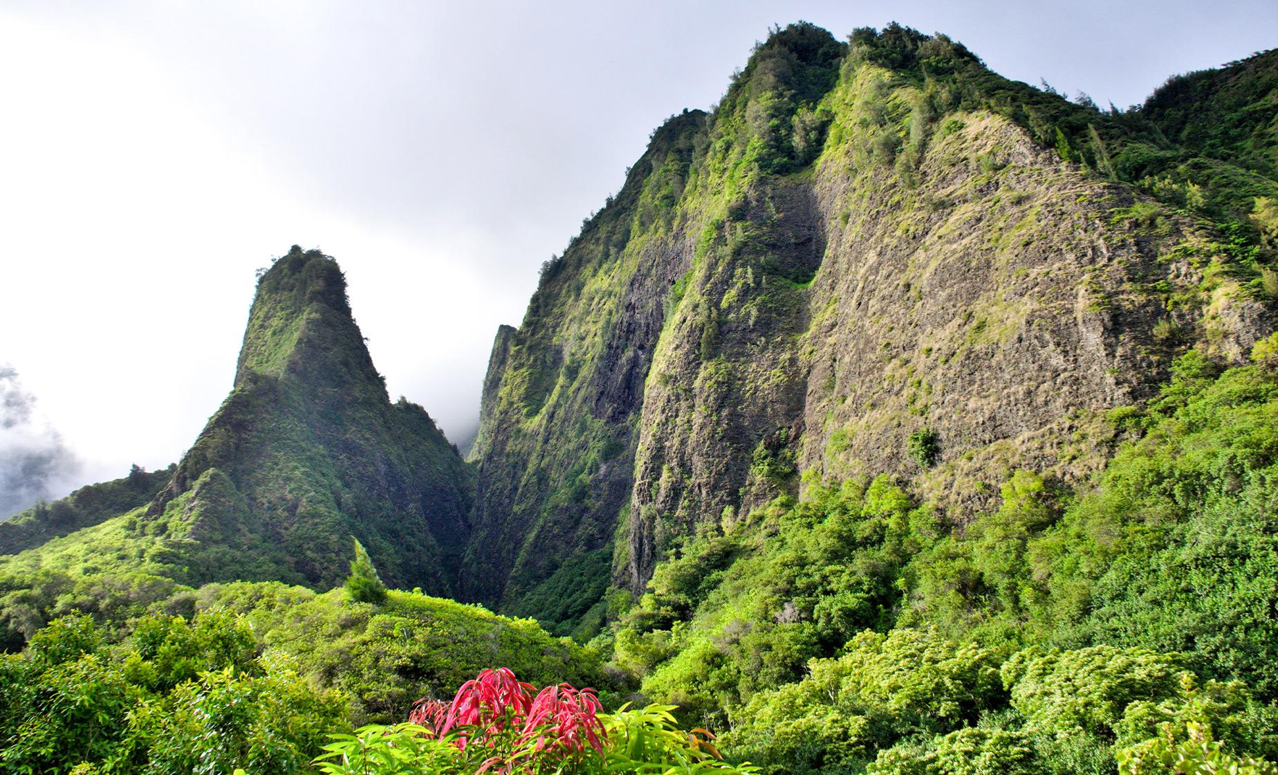 Hawaii Cruise Shore Excursions in Maui-Lahaina | tram ride plantation sugarcane  coffee Macadamia Nuts pineapple  famous landmark  state-of-the-art marine park aquarium in Maui-Lahaina