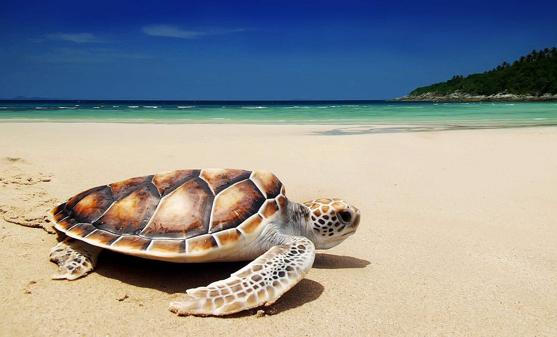 Hidden Gems of Oahu and North Shore Turtle Beach