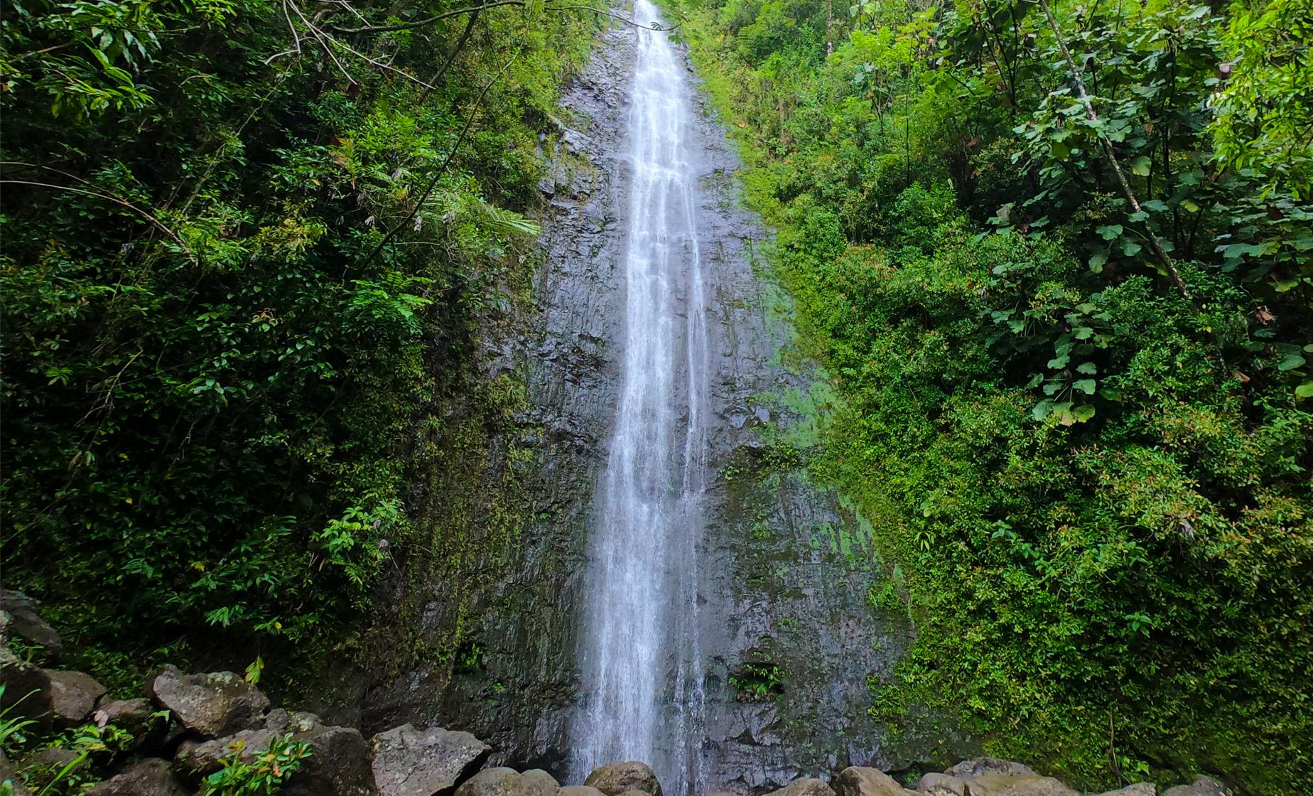 Hawaiian Rainforest Hike Tour in Oahu (Manoa Valley Rainforest)