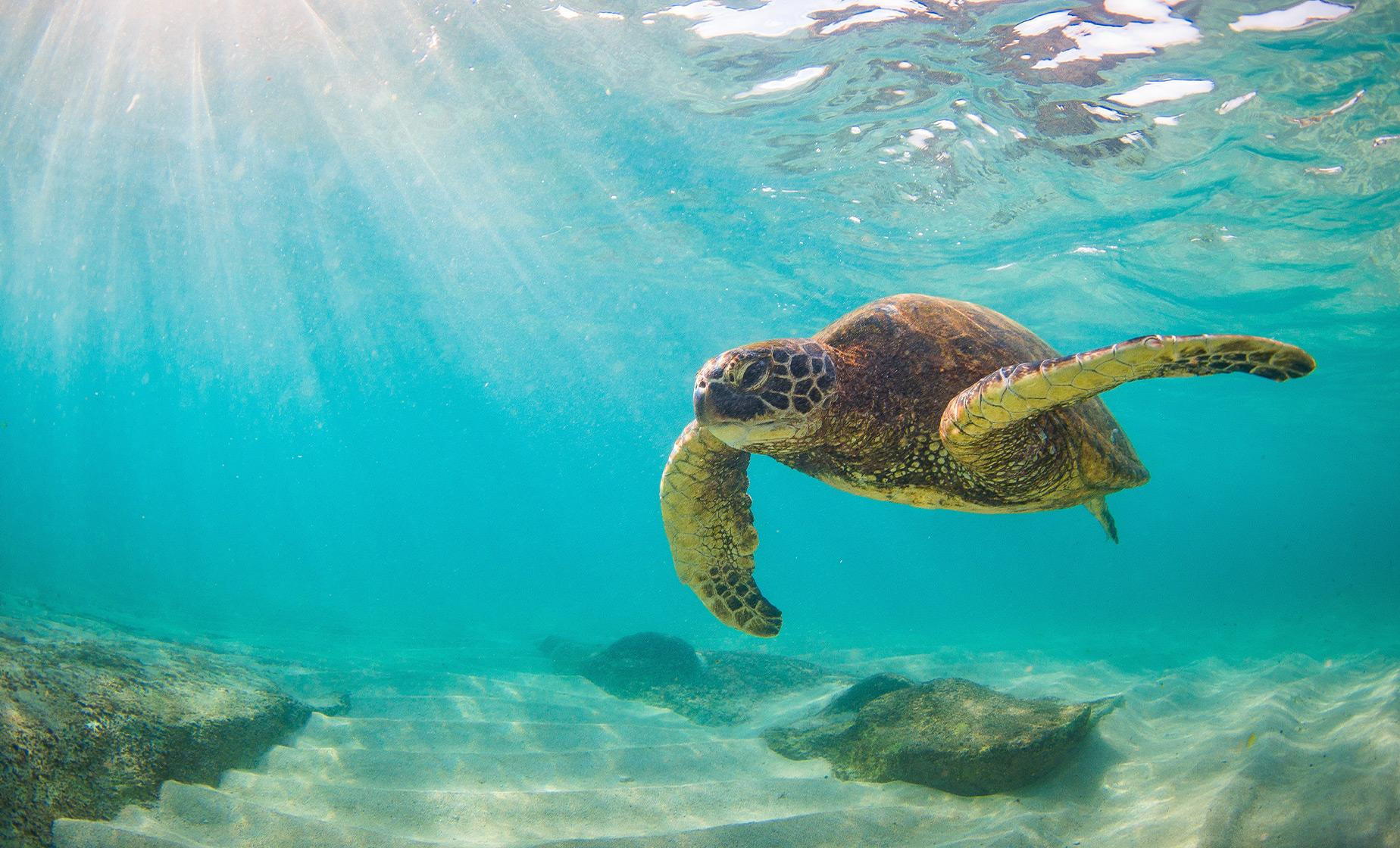 Turtles Guaranteed Morning Snorkel Sail