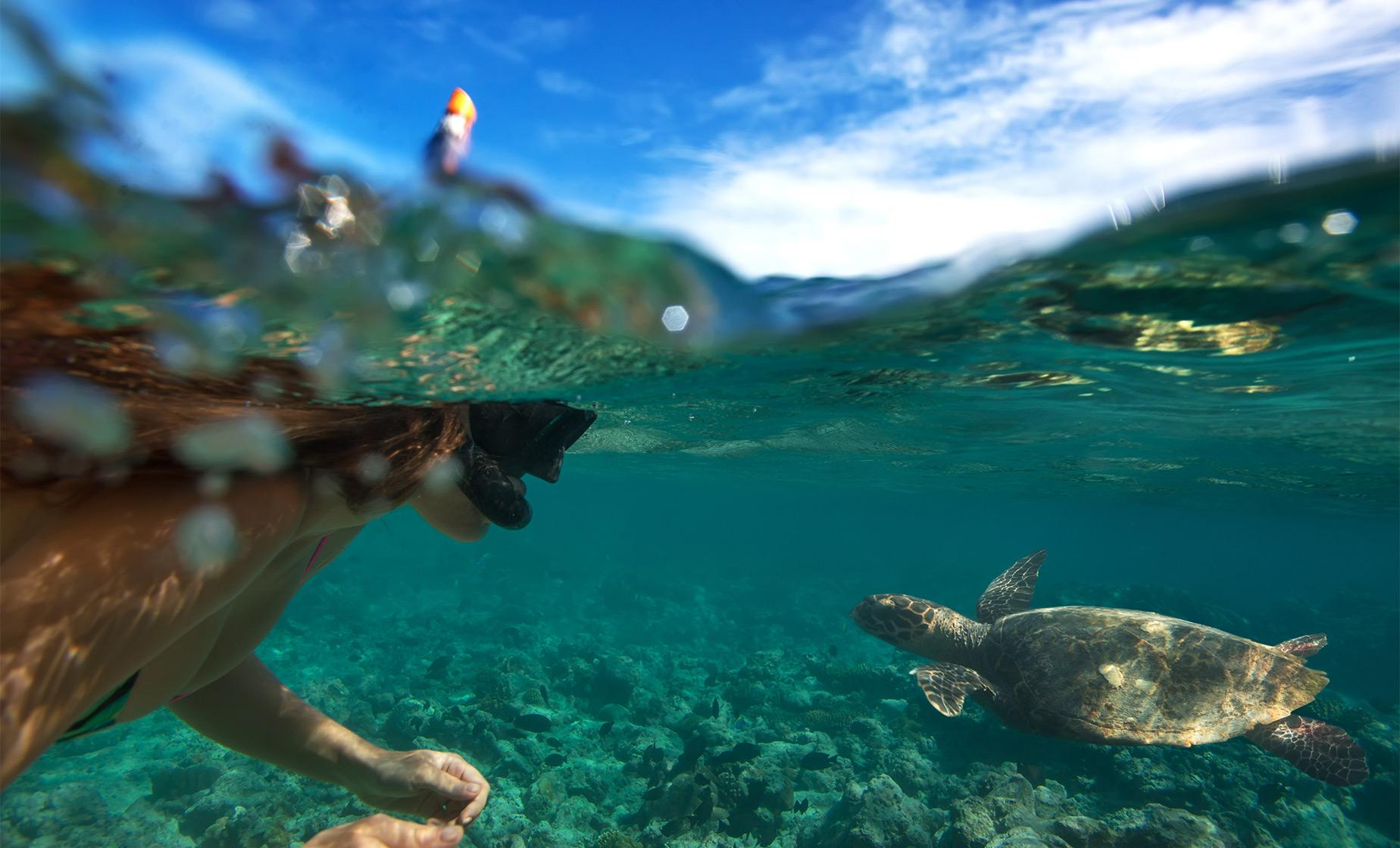 Snorkel, Sail and Dine with the Turtles